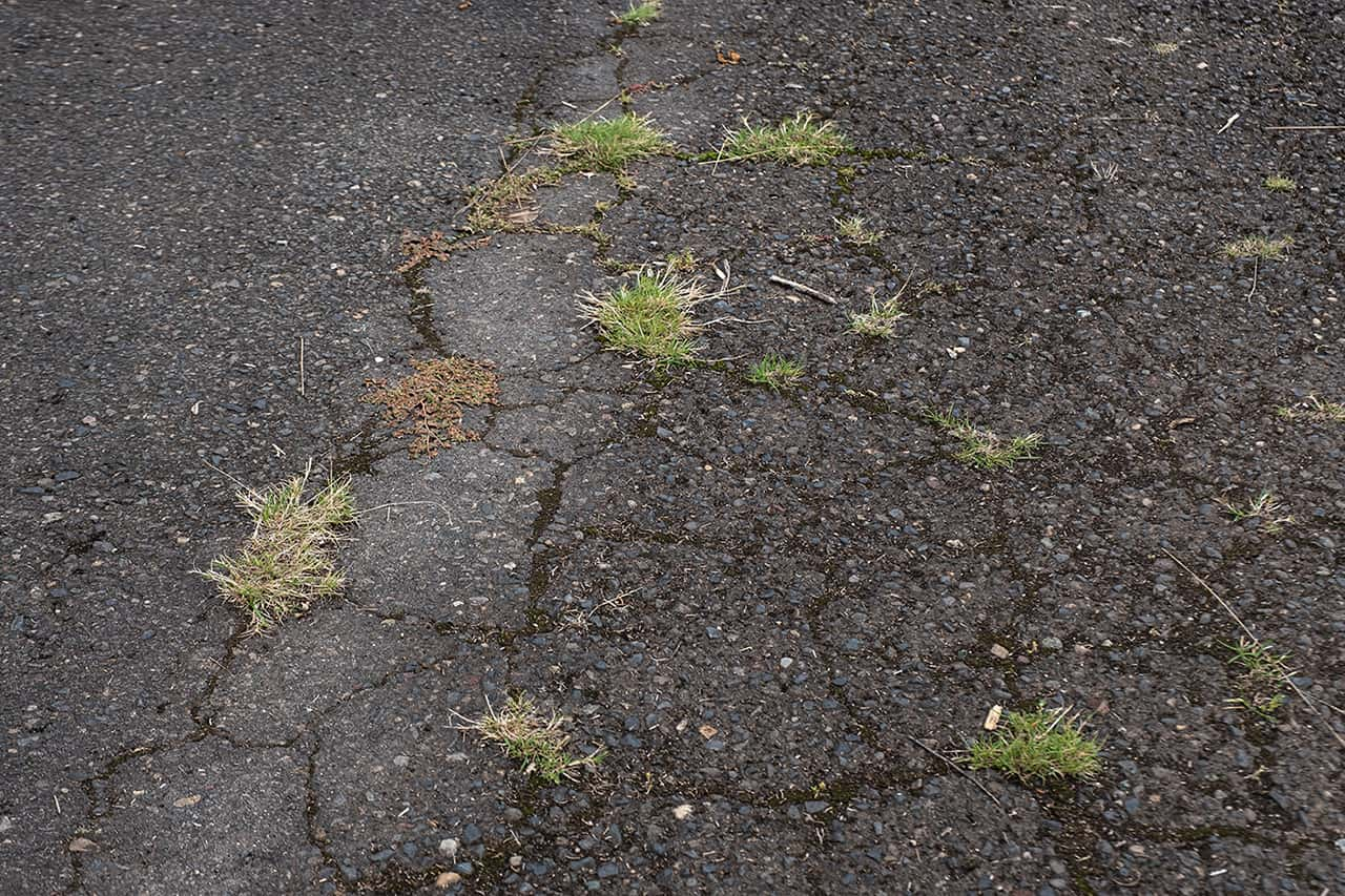 Asphalt Grass and Weed Growth